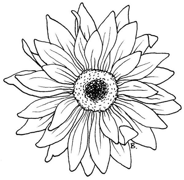 coloring pages of realistic sunflowers | Beccy's Place: Sunflower / Gerbera | Digital Images ...