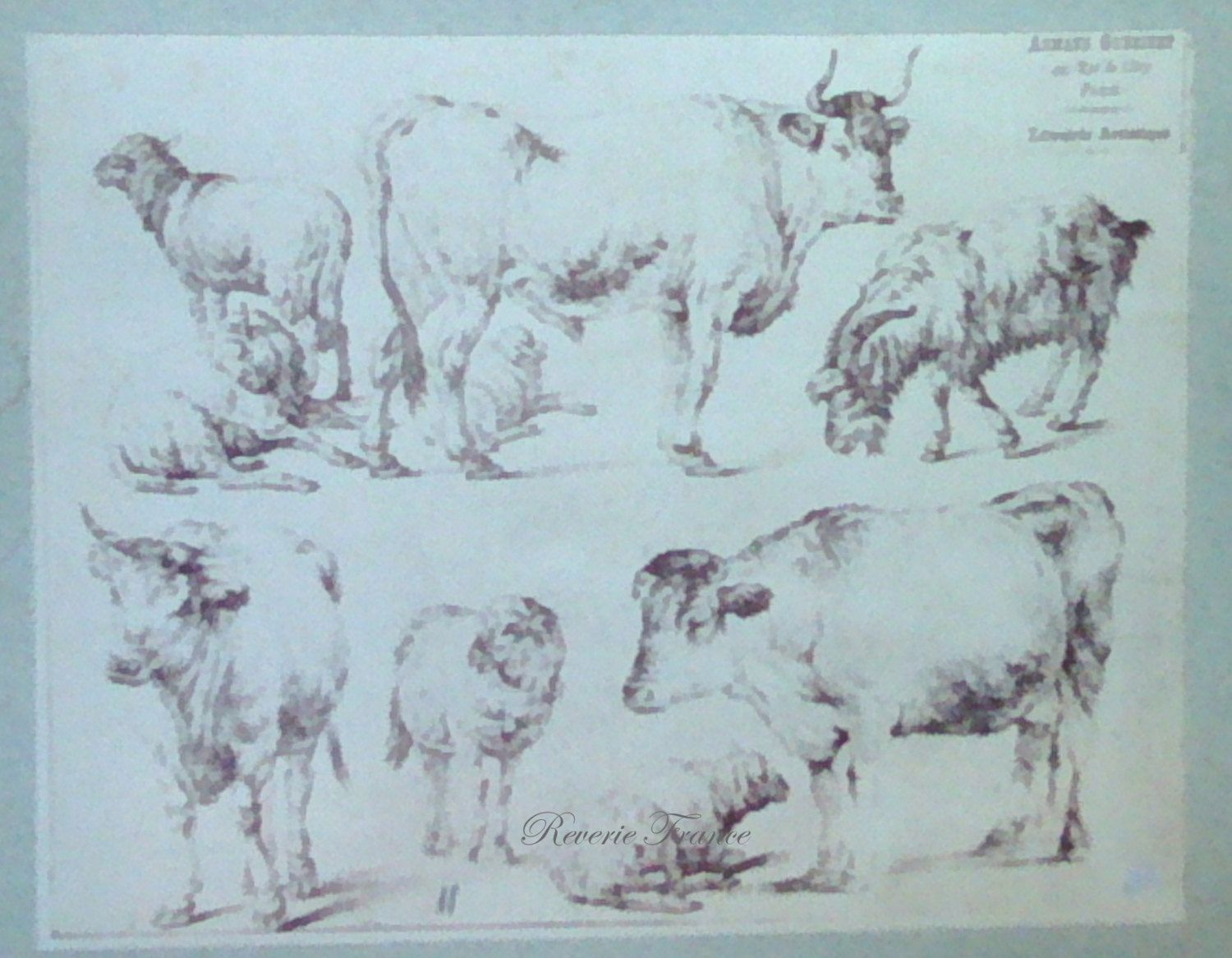 Antique French Engraving from 1769 Farm Animals by Jean Baptiste Huet, Sheep, Cows and Goats by reveriefrance on Etsy