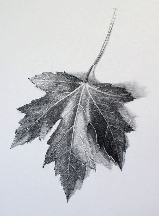 how to draw peepal leaf