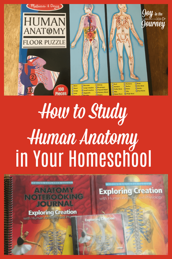 Do You Plan On Studying Human Anatomy In Your Homeschool Maybe You