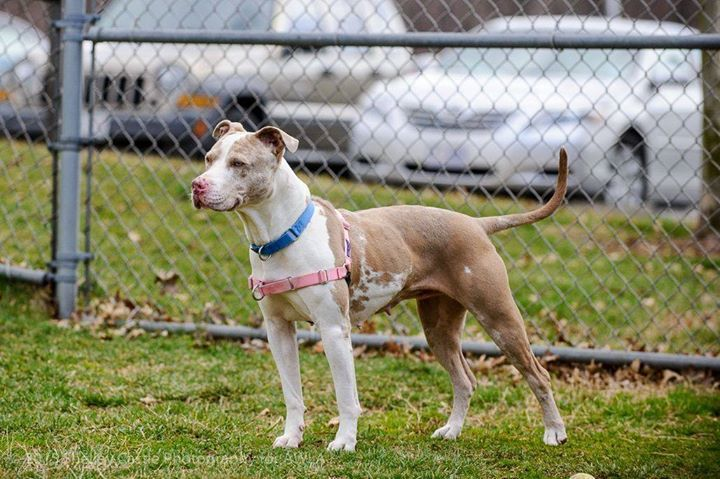 The Weather May Be Dreary But These Photos Of Bo Peep Are Sure To Bring A Smile To Your Face Bo Peep Has Been Waiting At Animal Welfare League Animals Photo