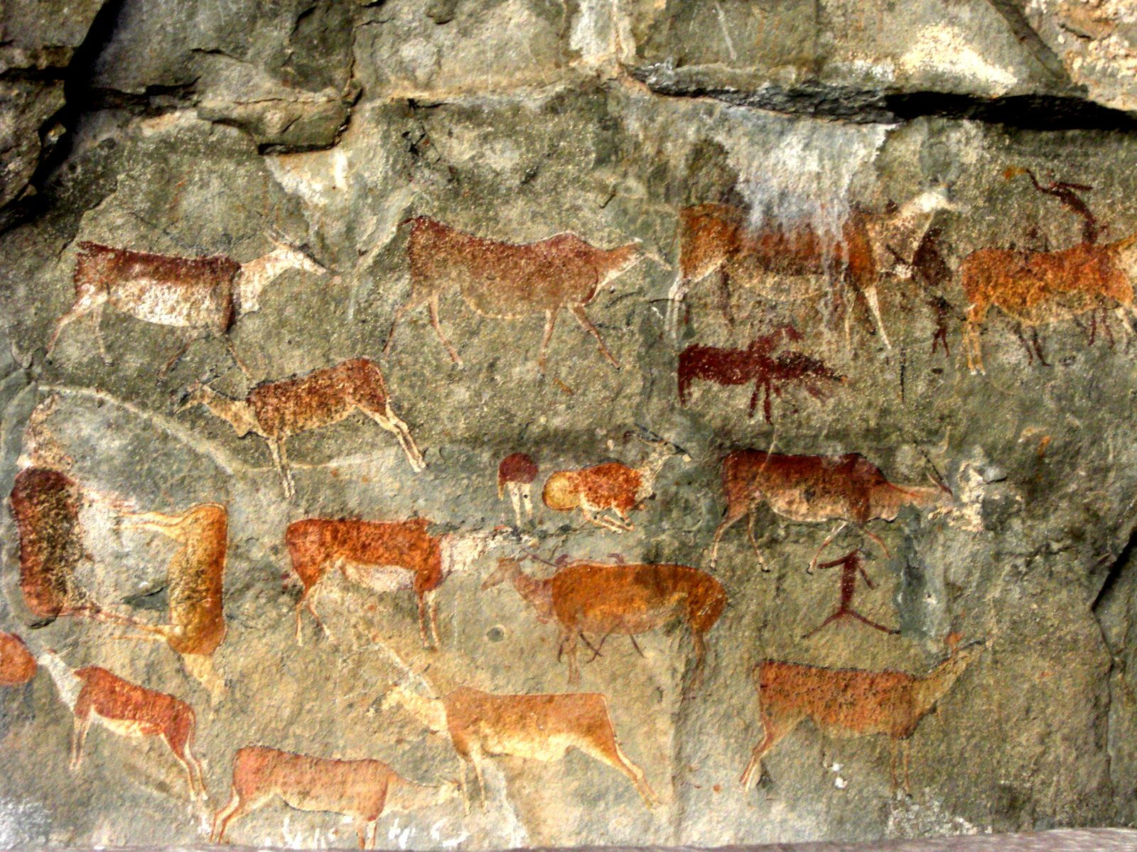 99 best southern african rock art images on pinterest rock art ancient rock painting south africa native american