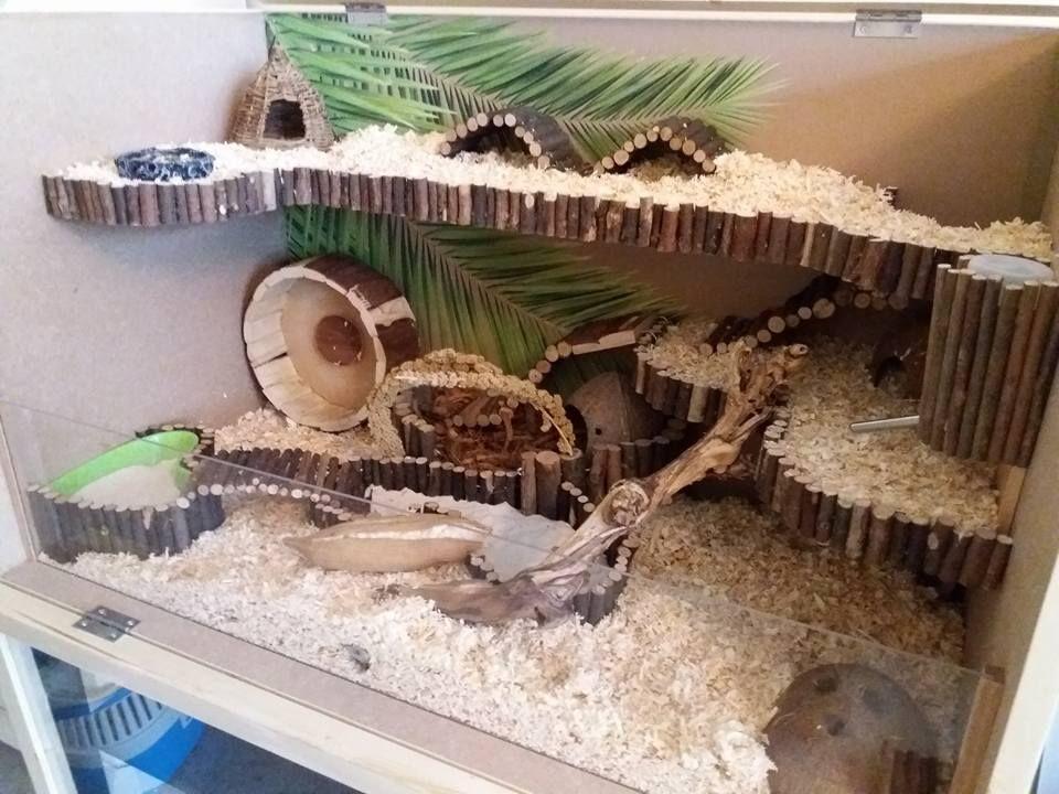Hamstercage Wood Diy Nature Hamster Habitat Hamster Diy Cage Hamster Cages