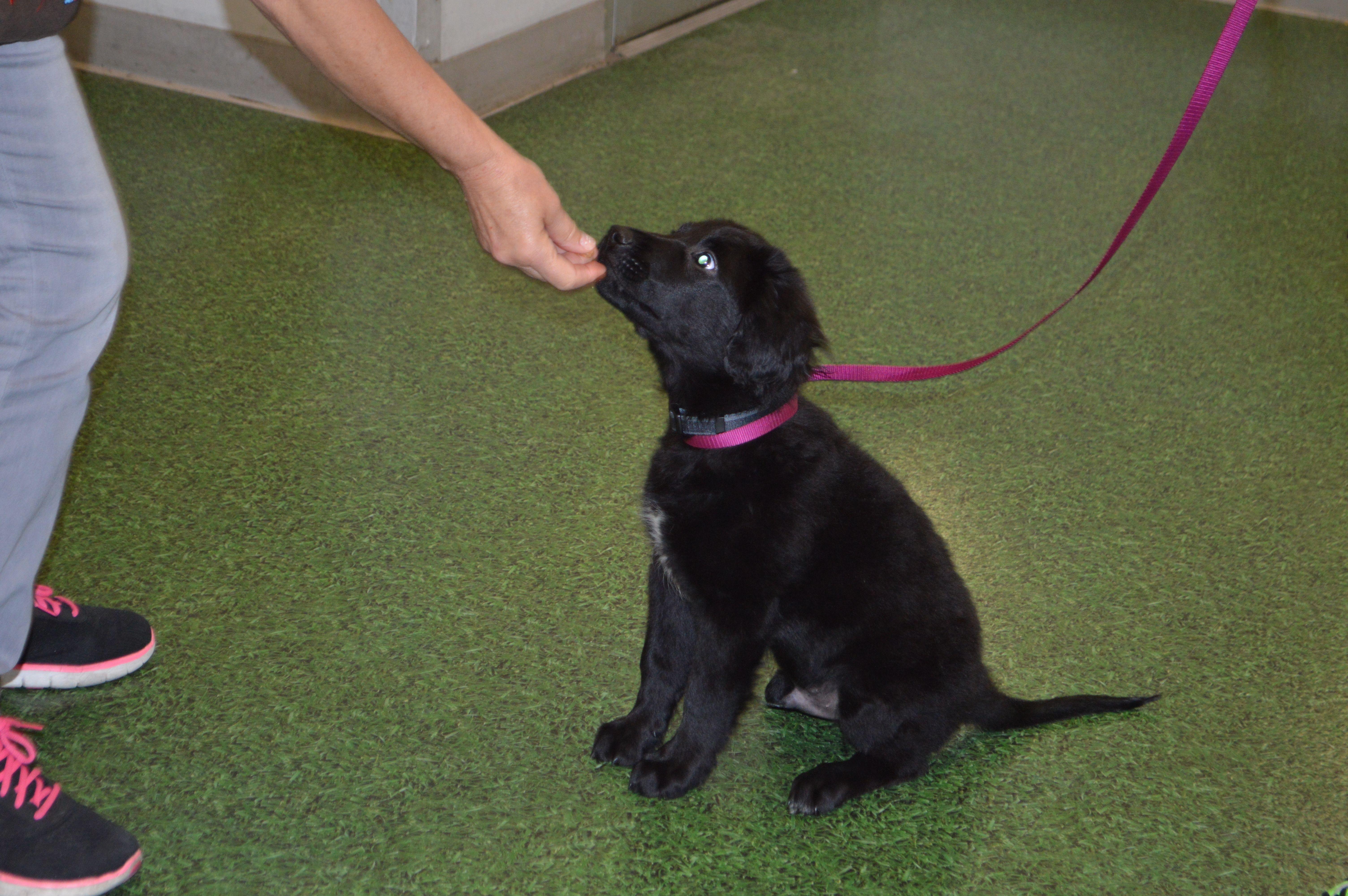 Border Collie Dog For Adoption In Deltona Fl Adn 491605 On