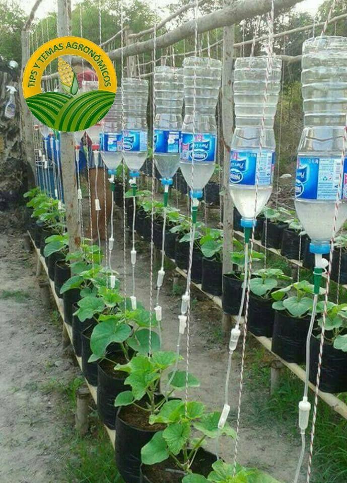 Sistema de riego por goteo programado reutilizacion de - Sistemas de goteo ...