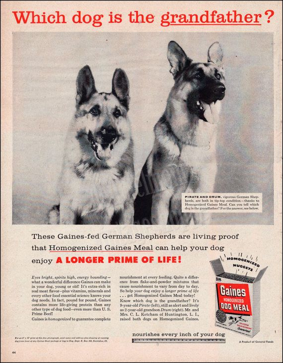 Gaines Dog Food Vintage Ad From 1956 German Shepherd Art