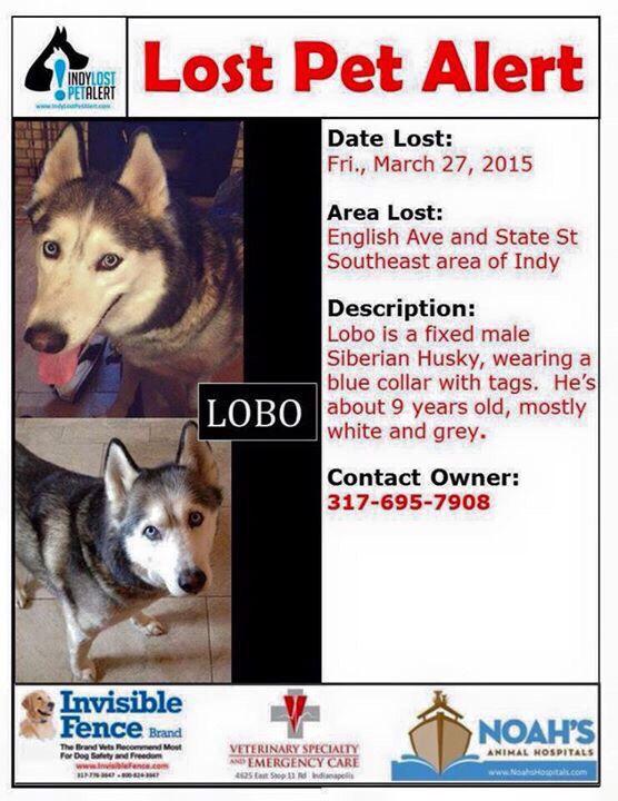 Lostdog 3 27 15 Lobo Indianapolis In Siberianhusky Nm 9y 317 695 7908 Https Www Facebook Com Huskydogslostfoun Losing A Dog Losing A Pet Siberian Husky