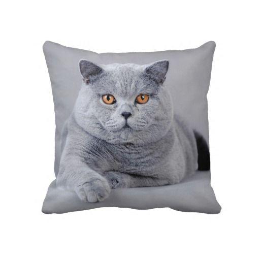 British Shorthair Cat Throw Pillow Zazzle Com British