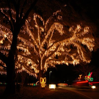 Festival of Lights, James Island. beautiful every year! - Top 10 Holiday Celebrations Christmas By The Sea Christmas