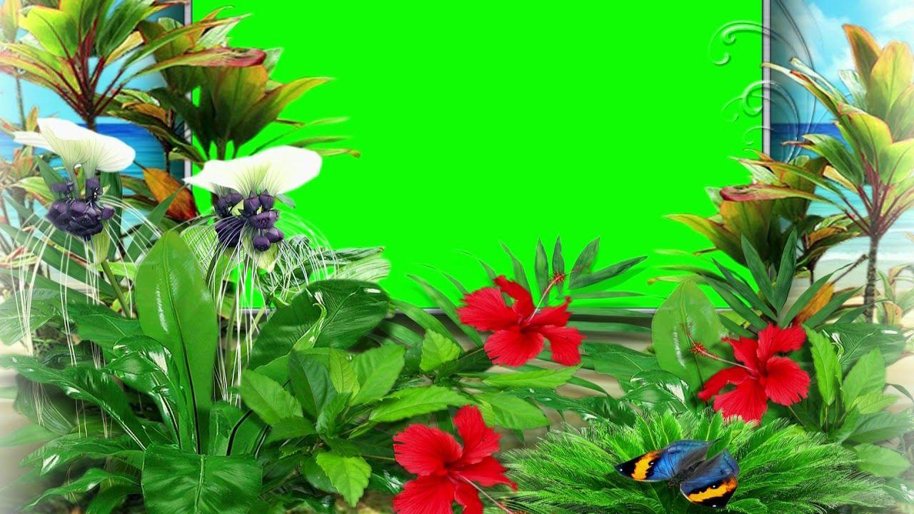 Wedding Video Background Green Screen Nature Beautiful Chroma Key Video Green Screen Video Backgrounds Greenscreen Wedding Background