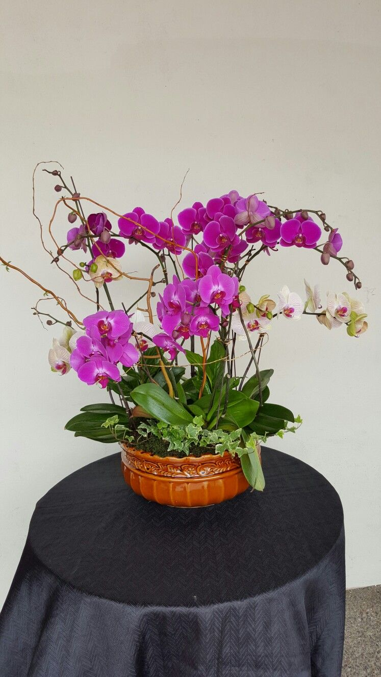 Purple orchid plants my flower arrangements pinterest orchid
