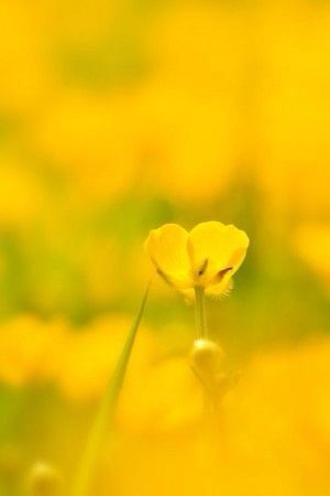 Pin By Mm Nn On Color Me Yellow Shades Yellow Photography