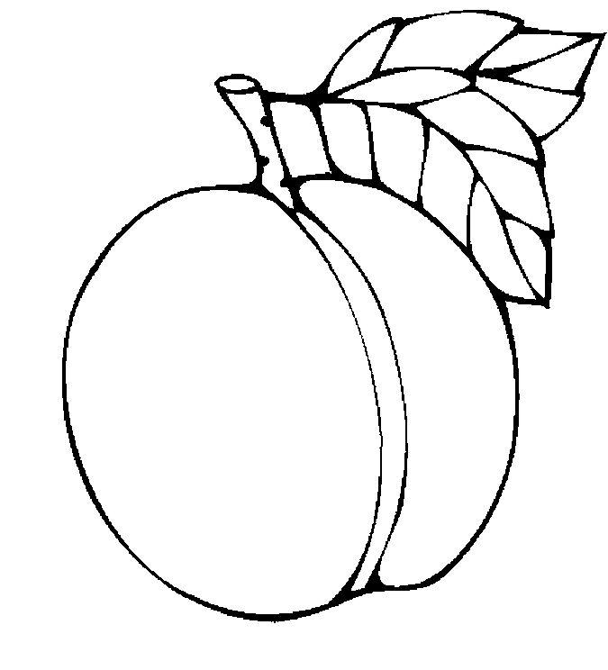Apricot 2 Jpg Jpeg Image 675 744 Pixels Scaled 80