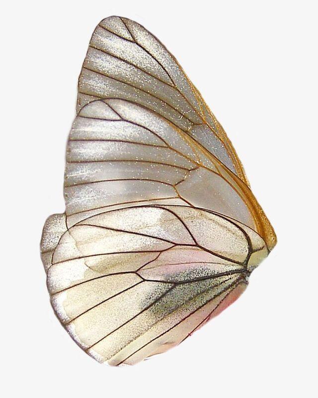 Vsco Mariaeduardda Images Wings Png Butterfly Wings Art