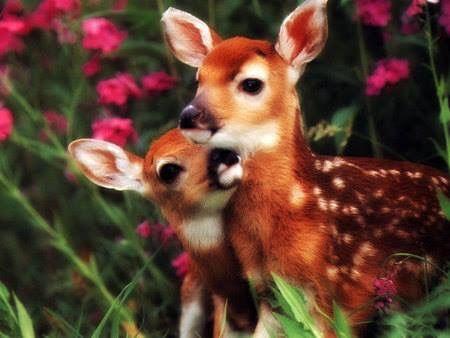 Spring Baby Does Baby Wild Animals Cute Baby Animals Baby Animals
