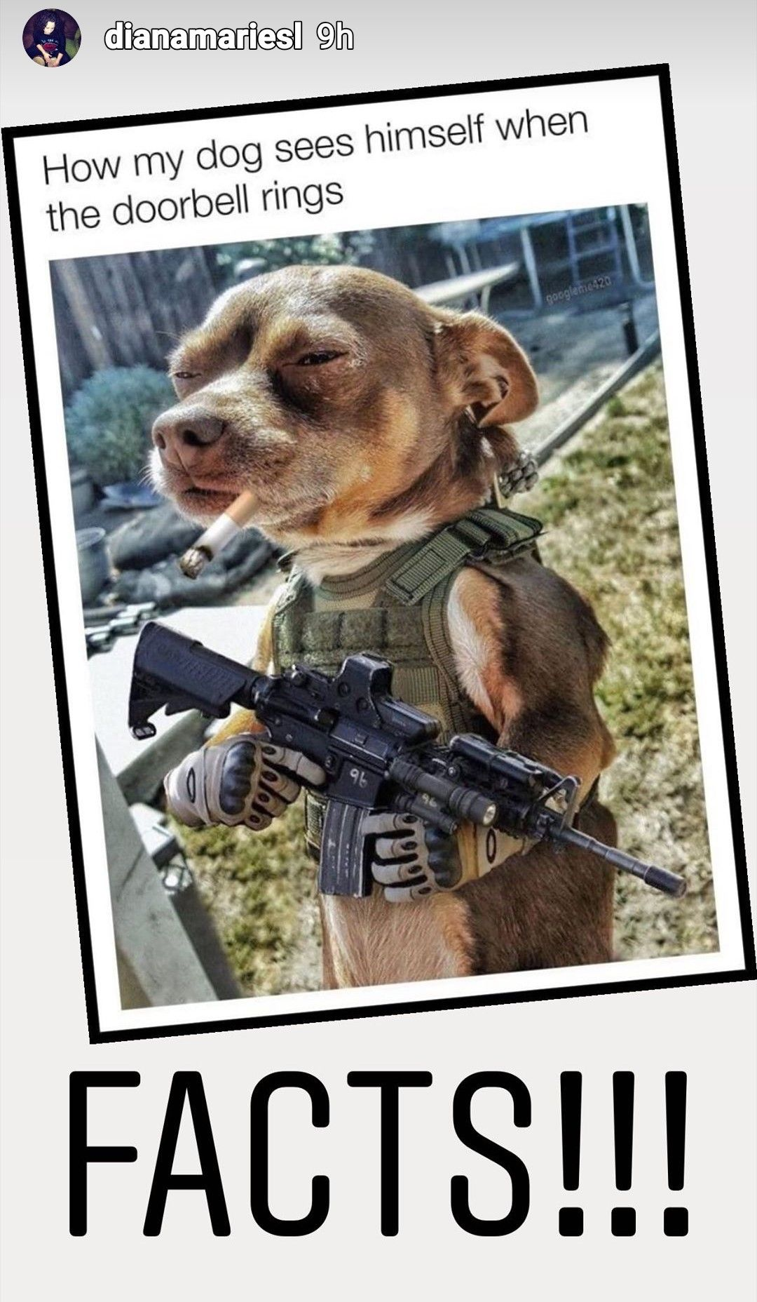 Pin by CoachMeDave on HUMOR in 2020 (With images) Dogs