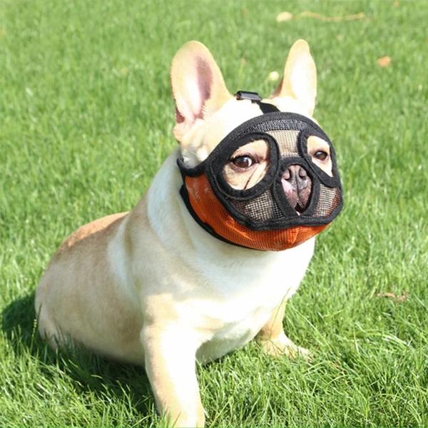 French Bulldog Muzzle Meme