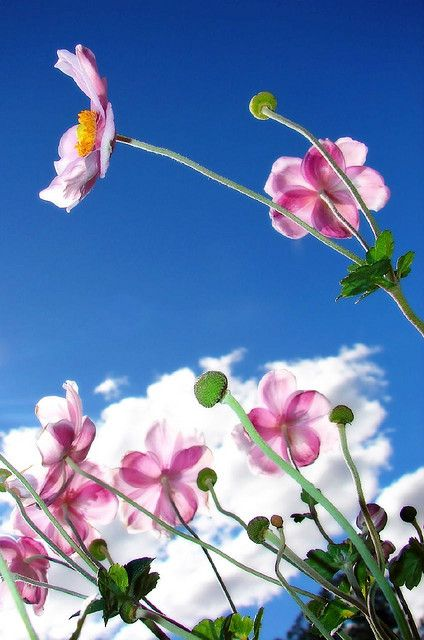 Windflowers....a nice inspiring walk...