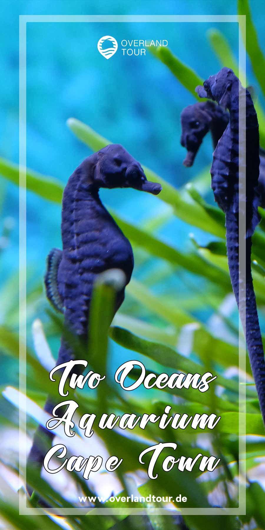 🐟 Two Oceans Aquarium Kapstadt Sehenswürdigkeit   Das Two Oceans Aquarium an der Waterfront in Kapstadt ist beeindruckt mit seinen vielen exotischen Fischen. Die Predator- Exhibit im Open Ocean Tank