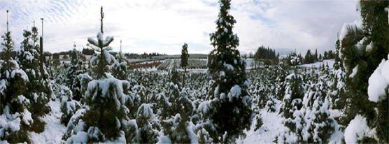 Hillside Tree Farm Explore California El Dorado County Apple Hill California