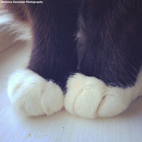 Cat Toes - Fine Art Photography - Kitten Feet - Socked Paws - Tuxedo Cat