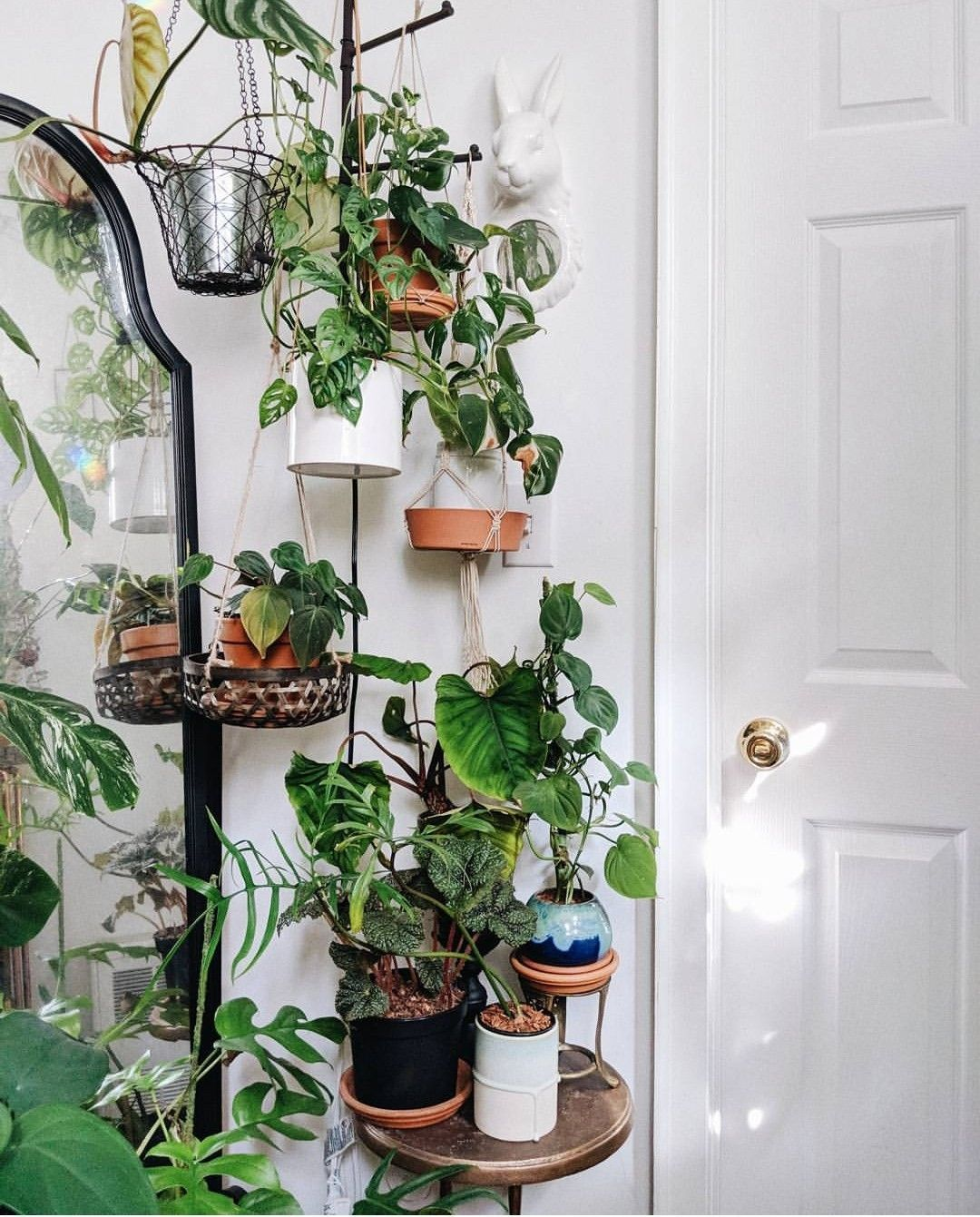 Ou Acheter Un Mur Vegetal Interieur plants - fleurs - plantes - jungle - houseplants - plantes