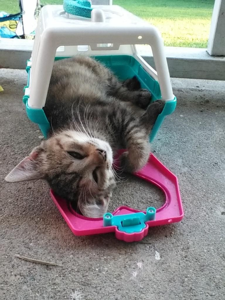 Kitten Ready For Doc Mcstuffin And Her Pet Vet Helpers Http Ift Tt 2tfo08n Pet Vet Pets Cat Empire
