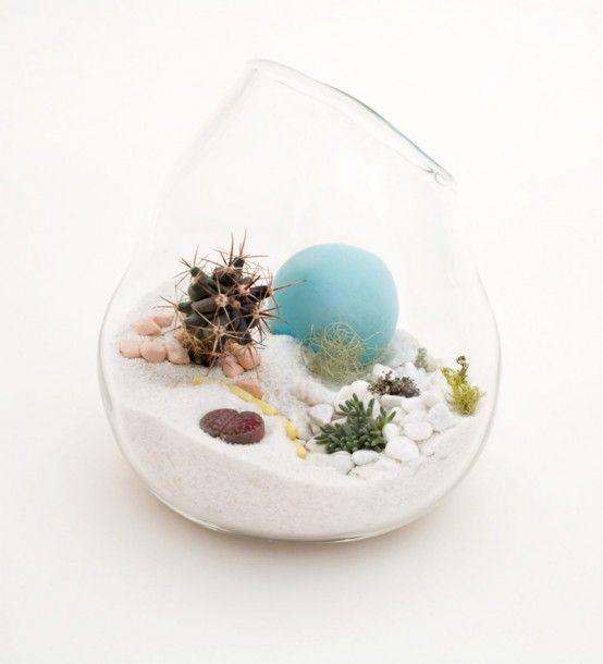 white sand terrarium - White Sand Terrarium For Home Pinterest Pettirossi