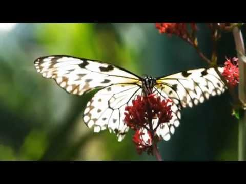 Science Nature Page Science Nature Page Videos Science And Nature Co Science Nature Page Science Nature Science Nature