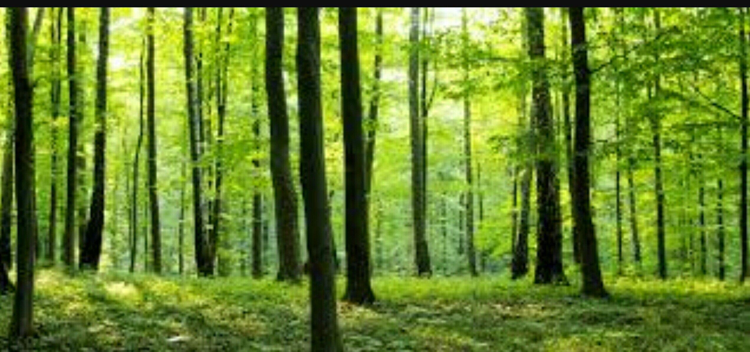 Association of Irish Forestry