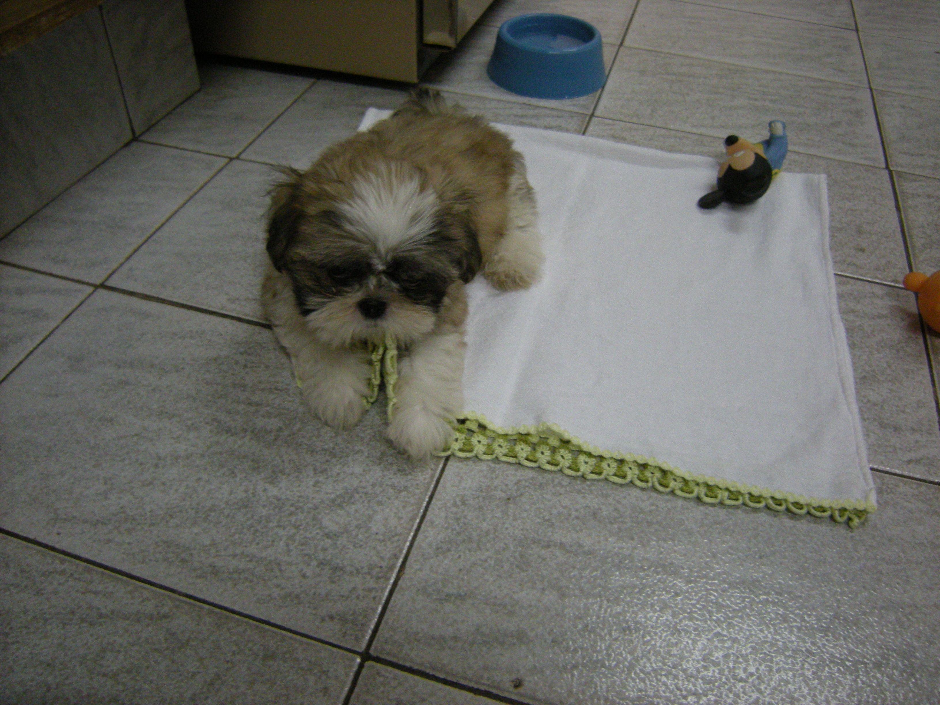 Nosso cachorrinho Toby