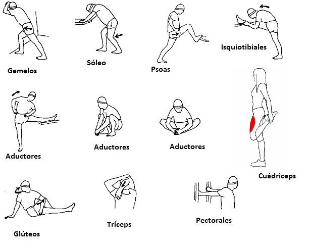 Actividad Fisica Y Salud Ies Juan De Lucena Tabla De Ejercicios Gimnasticos Para El Calentamiento Estiramientos Ejercicios De Calentamiento Ejercicios