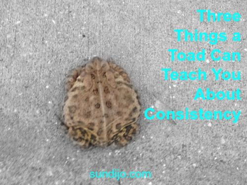 Three Things a Toad Can Teach You About Consistency