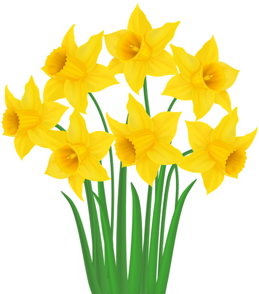 Daffodil Drawing Flower Plant For Easter 530x600 In 2020 Flower Drawing Daffodils Yellow Daffodils