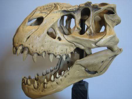 Image result for vastatosaurus rex skull