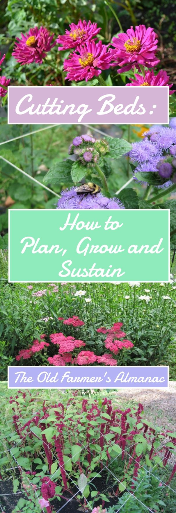 pin on how does my garden grow on 54 Without Planning In A Beautiful Gardening id=32333