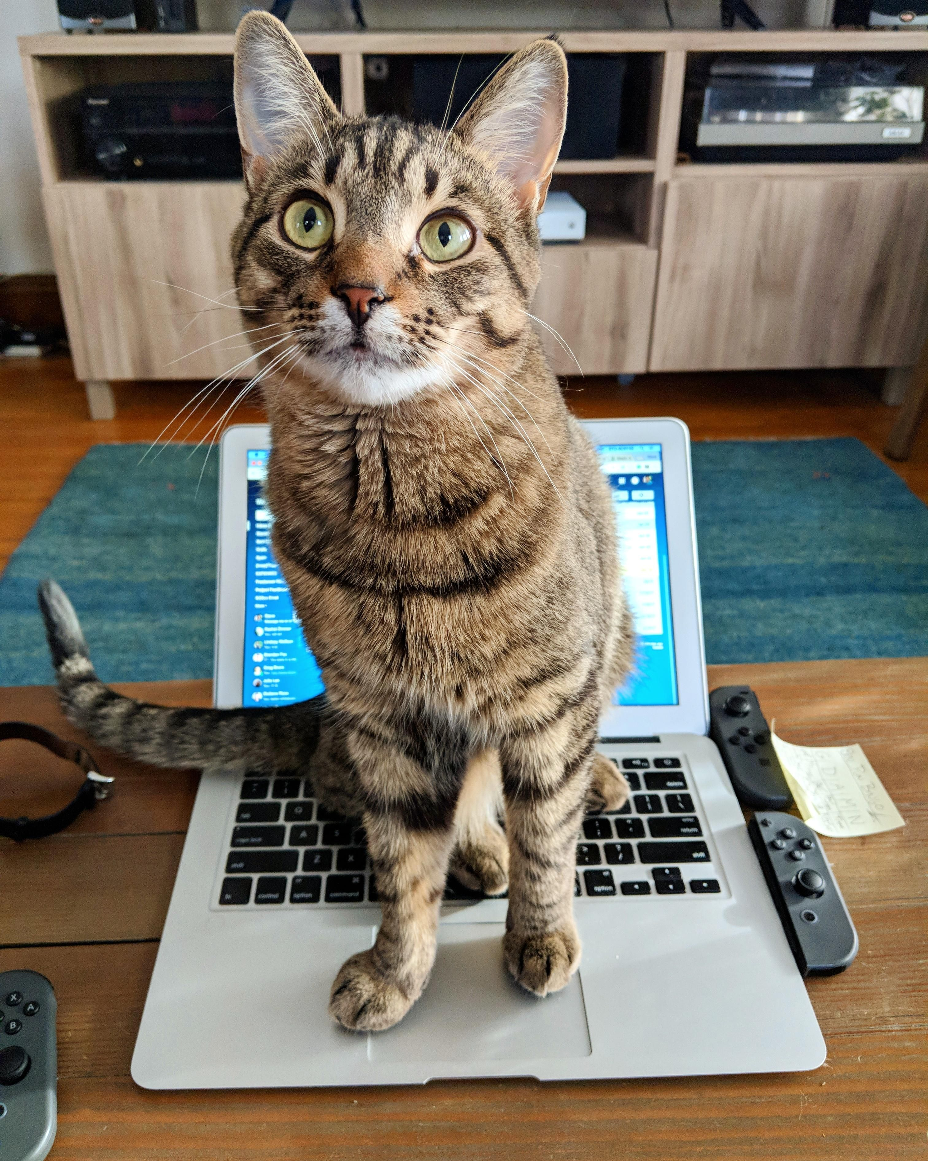 """Hasn't really grasped the whole """"working from home"""" thing"""