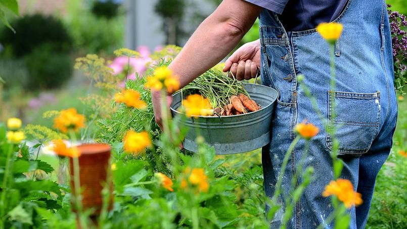 quelles fleurs cultiver dans un potager jardiner observer apprendre semer voir pousser. Black Bedroom Furniture Sets. Home Design Ideas