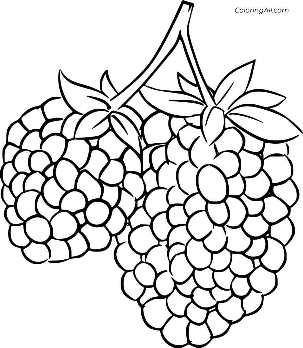 8 Free Printable Blackberry Coloring Pages In Vector Format Easy To Print From Any Device And Automatical Blackberry Color Fruit Coloring Pages Coloring Pages