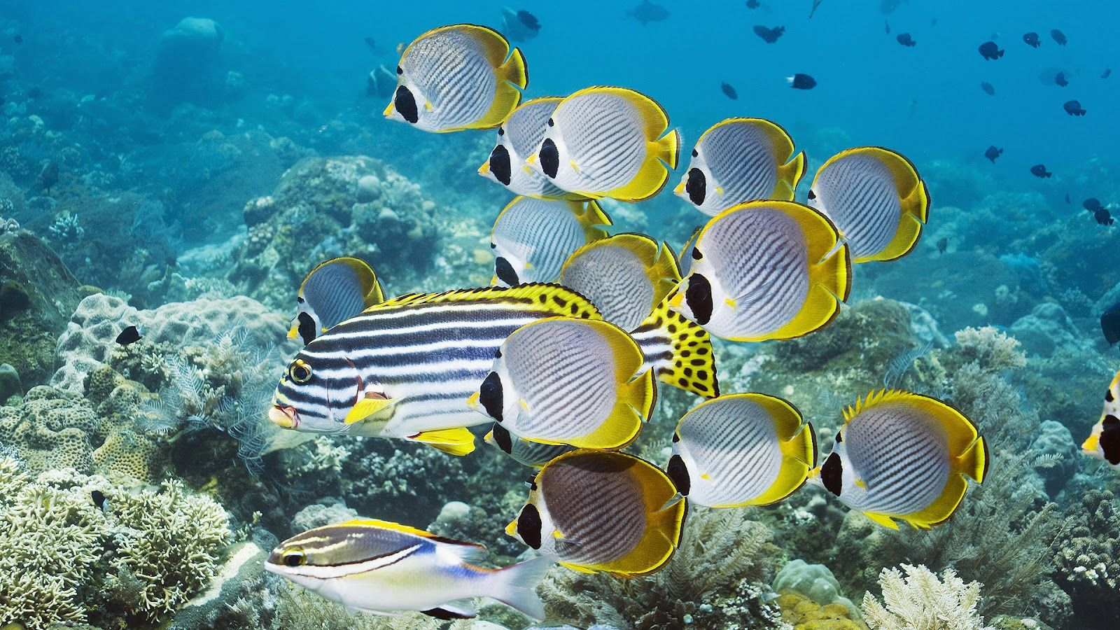 Tropical fishes tropical fish wallpapers hd wallpapers for Sea water fish