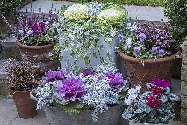Pflanzen Sie Ihren Garten für den Winter. Mach es magisch #wintergardening