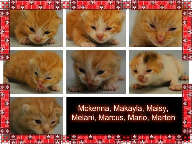 The M Kittens A1071256 A1071257 A1071258 A1071260 A1071261 A1071262 A1071263 Kittens Animal Rescue Cat Lovers