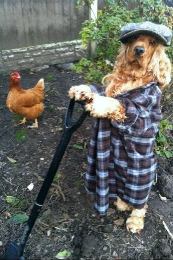 Apparently the dog has been impersonating the gardener for a month and blew all his money on a bacon seed investment.