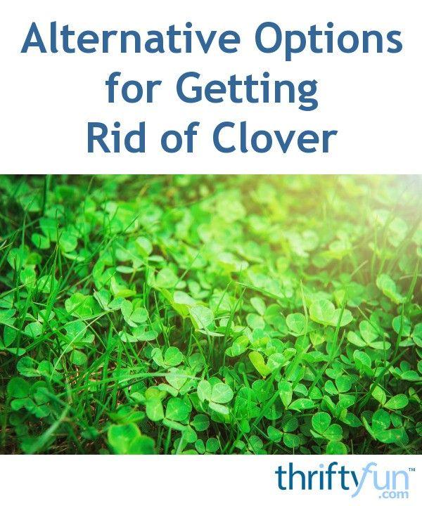 765c0008efc9df0d1b741c744eebf362 - How To Get Rid Of Clover Patches In Lawn
