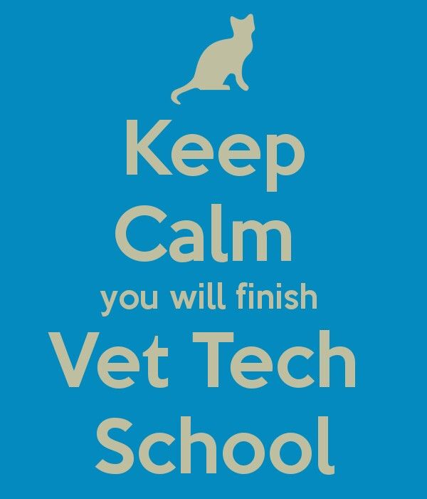 Advice for future and current vet tech students...I survived and kept most of my sanity. You can do it!  ; )
