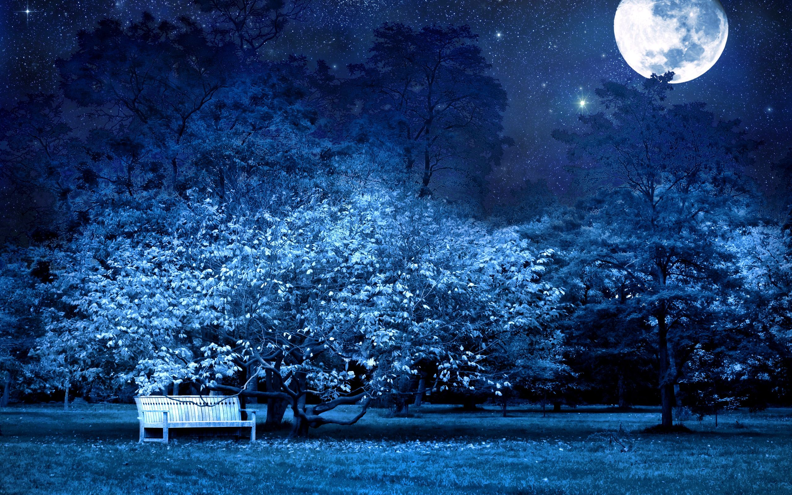Wallpaper Nature Park Night Moon Tree Bench Secret
