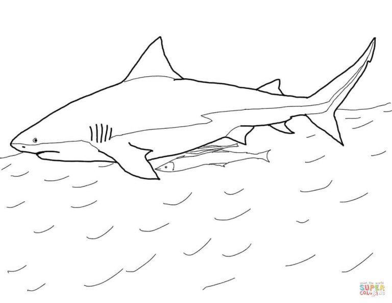 Oceanic Whitetip Shark Coloring Page