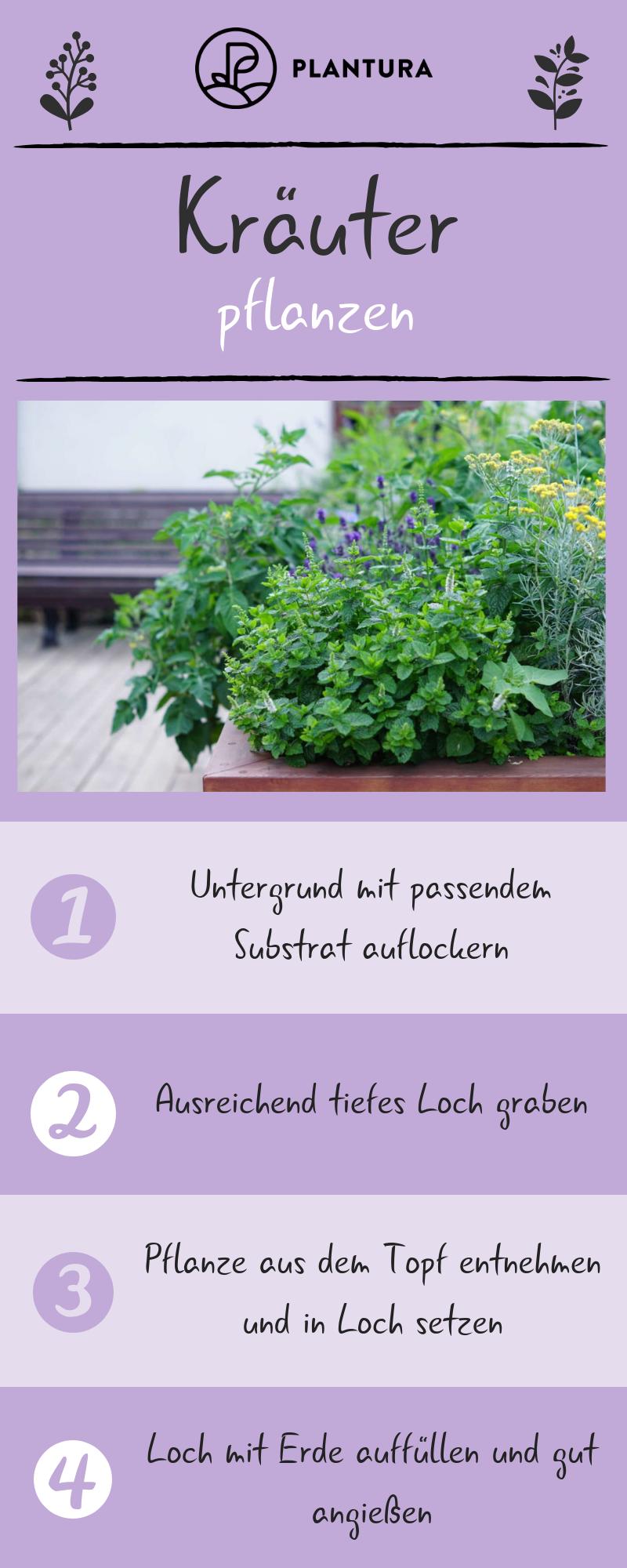 Kräuter Pflanzen Anleitungen Tipps Für Fensterbrett Balkon