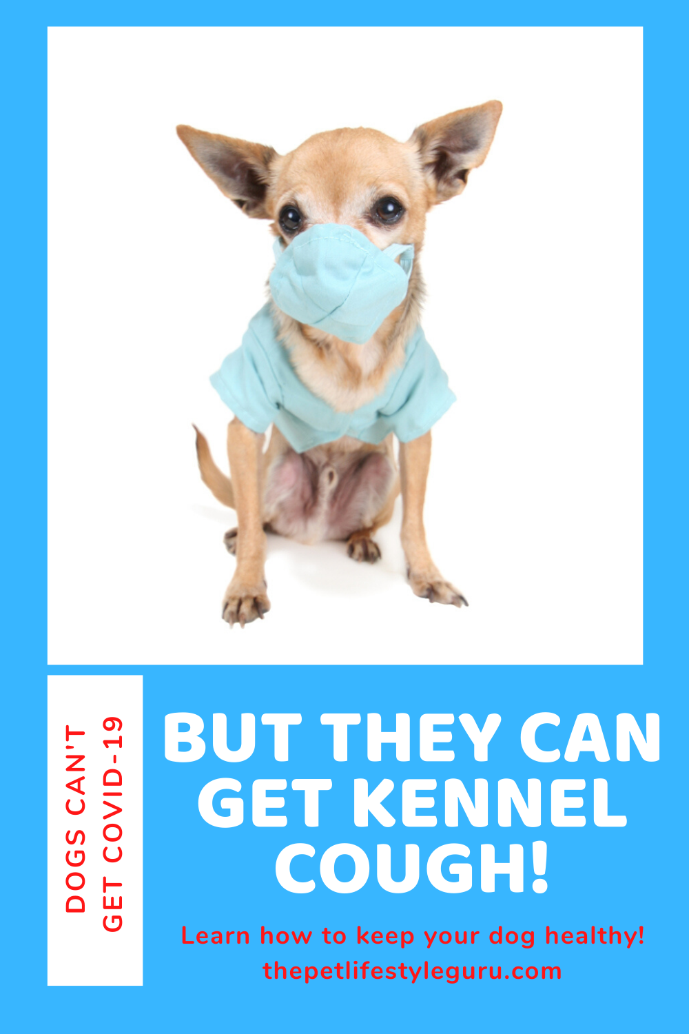 Naturally Heal Kennel Cough In 2020 Dog Advice Natural Pet Care Your Dog
