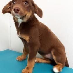 Available pets at Wright-Way Rescue in Morton Grove, Illinois #mortongrove Available pets at Wright-Way Rescue in Morton Grove, Illinois #mortongrove Available pets at Wright-Way Rescue in Morton Grove, Illinois #mortongrove Available pets at Wright-Way Rescue in Morton Grove, Illinois #mortongrove